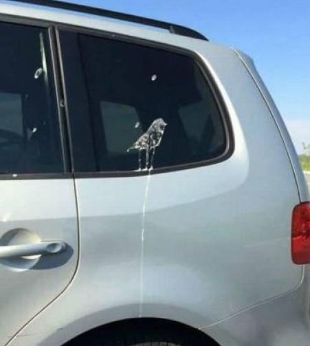vogelschiss.jpg